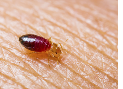 Bed Bug Pest Control in West Lothian